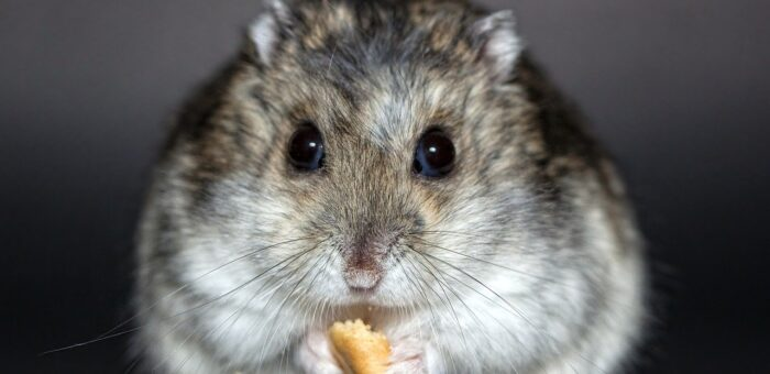 How To Use Pest Control Products Safely